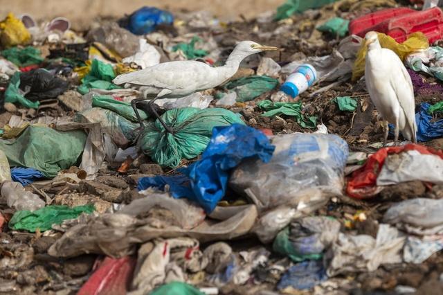 Μέχρι το 2050 το 99% των πουλιών θα καταπίνει πλαστικά