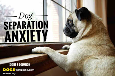 Dog Anxiety, dog anxiety solution, cause of dog anxiety, treatment for dog anxiety