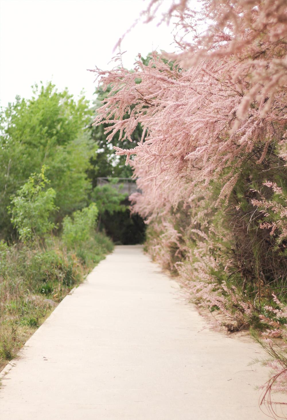 tamarindo paseo contemplativo zaragoza primavera