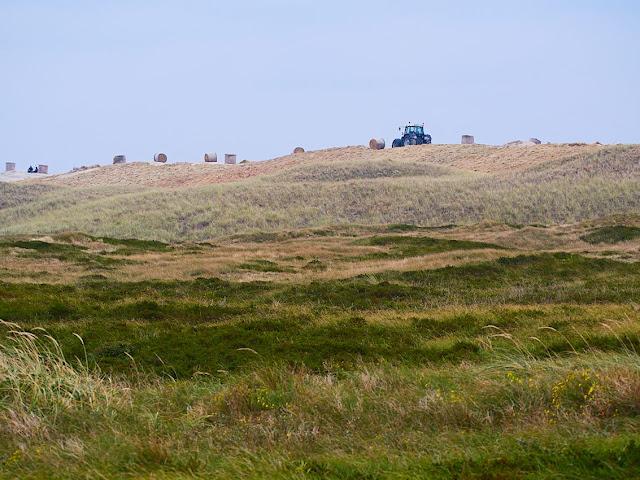 Zum Küstenschutz wird auf Langeoog eine künstliche Düne aufgeschüttet.