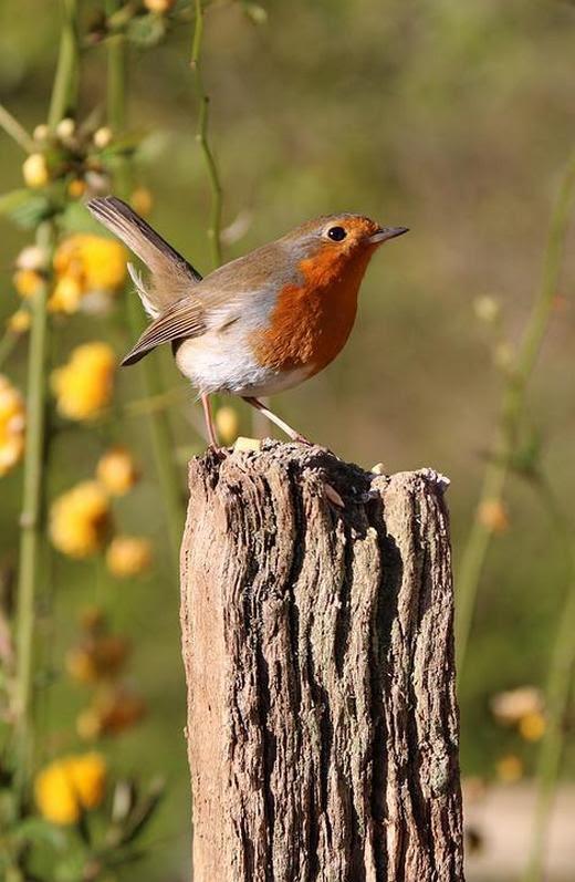 Little bird is sitting on the stump