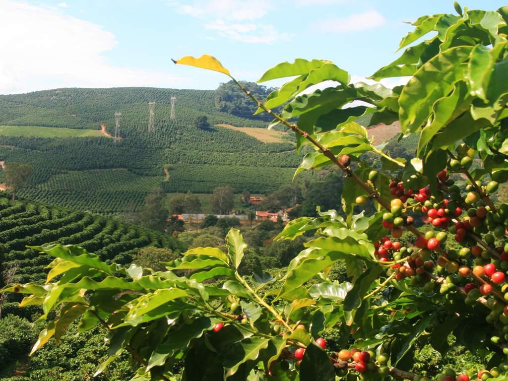 Economia cafeeira