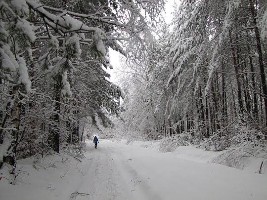 Szeroka droga zagłębia się w ciszę lasu.