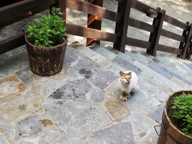Cyprus Road Trip: Cat outside To Anoi restaurant in the Troodos hill town region.