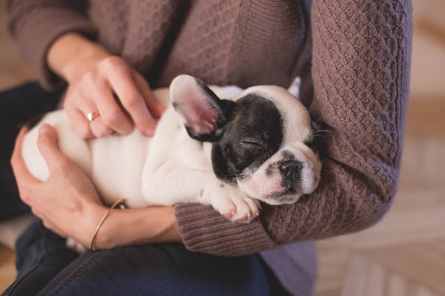 Tips and physiological indicators for nappy on the health of the dog