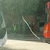 فضيحة ...سقوط كابل كهربائي بشارع بن خلدون يقطع حركة المرور لازيد من ساعتين