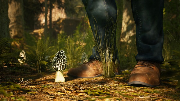morels-the-hunt-pc-screenshot-1