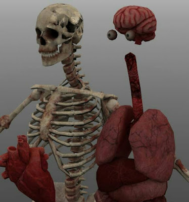 Download 3D Model Skeleton