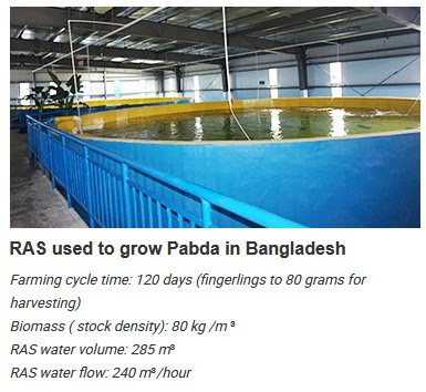 High Density Intensive Aquaculture System