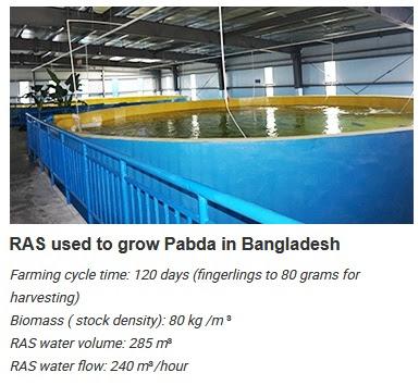 High Density Intensive Aquaculture System