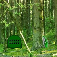 BigEscapeGames Tropical Evergreen Forest Escape