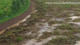 pengolahan ladang tanaman padi
