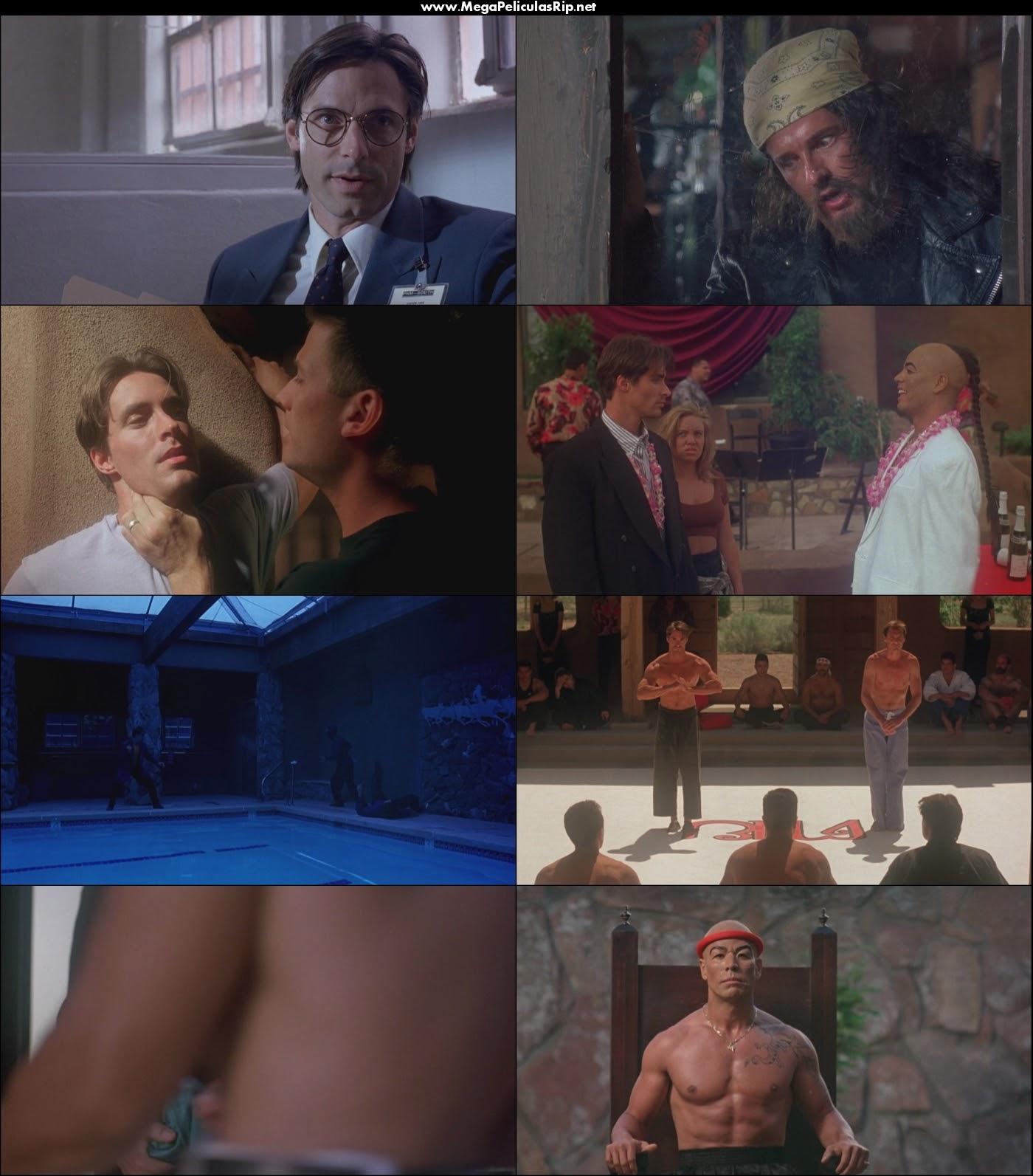 Kickboxer 4 1080p Latino