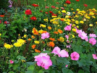 jardines con flores