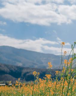 Mountain Blur Background Free Stock Photo
