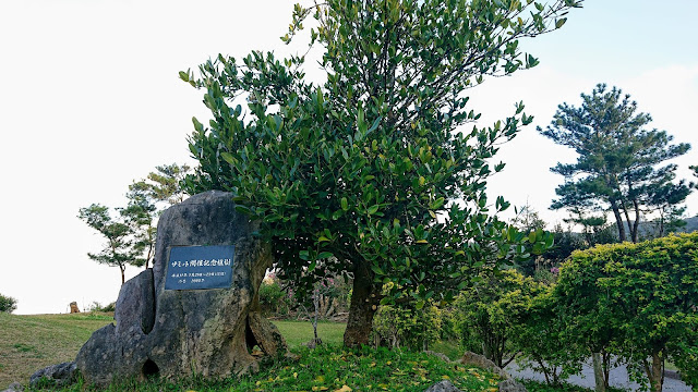 沖縄 八重岳 桜まつり