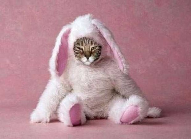 Unhappy Easter Bunny Cat Picture
