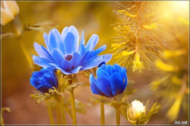 ảnh hoa màu xanh đẹp nhất