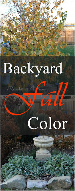 Beautiful yard full of gorgeous fall color. Take a zone 5 tour through a beautiful Indiana garden in Fall