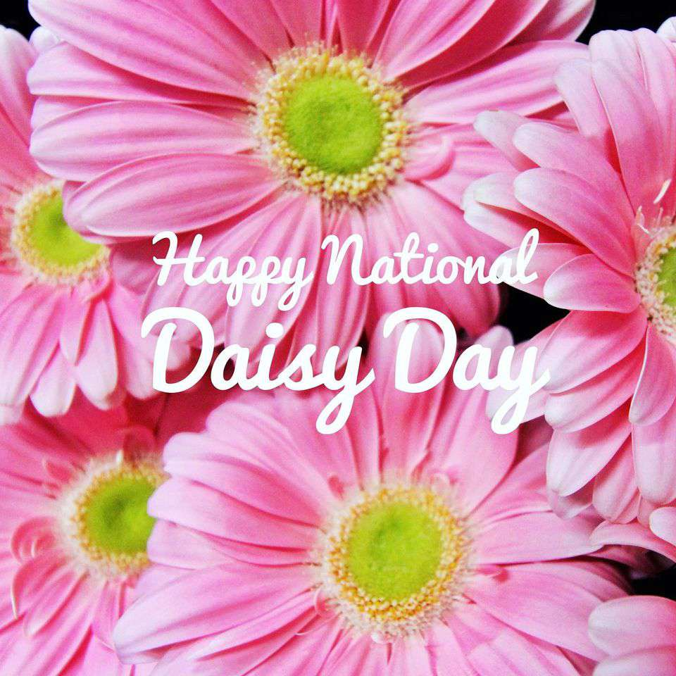 National Daisy Day Wishes for Whatsapp