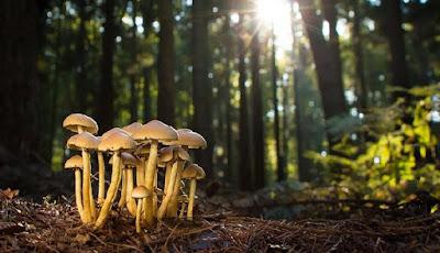 Fakta unik tentang jamur