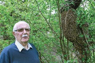 Bernard Sinet devant l'essaim de 15 000 à 20 000 abeilles - Cheverny