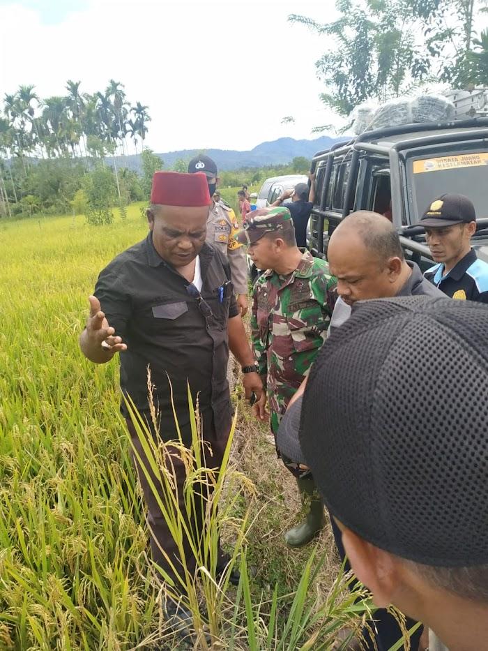 Abusyik Pantau Hasil Penyemprotan Pupuk Alam Organik di Geumpang