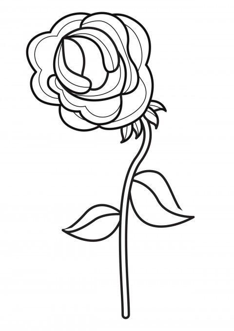 Cara Mewarnai Bunga Mawar