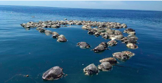 300 Endangered Turtles Were Discovered Dead, Trapped in Nets, Off Mexico's Coast