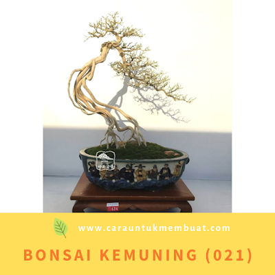 Bonsai Kemuning (021)