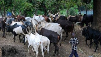 Suspected Herdsmen Kill Traditional Ruler, His Wife & 8 Others In Kogi