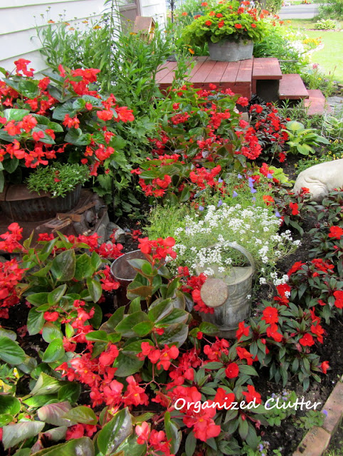 Red Begonias and Impatiens