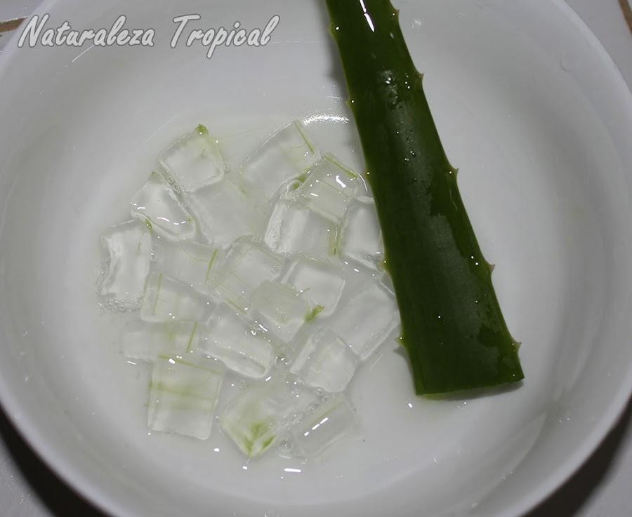 Plato con hoja de Sábila y cuadros del gel curativo, Aloe vera