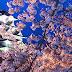 5 Tempat Paket Perjalanan Wisata Ke Jepang