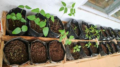 Berkebun, Menanam Kehidupan Demi Kehidupan