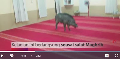 Viral Babi Hutan Masuk Masjid di Serang Saat Ibu-ibu Lagi Pengajian