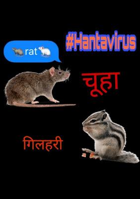 Hantavirus symptoms : जाने हन्ता वायरस क्या  है