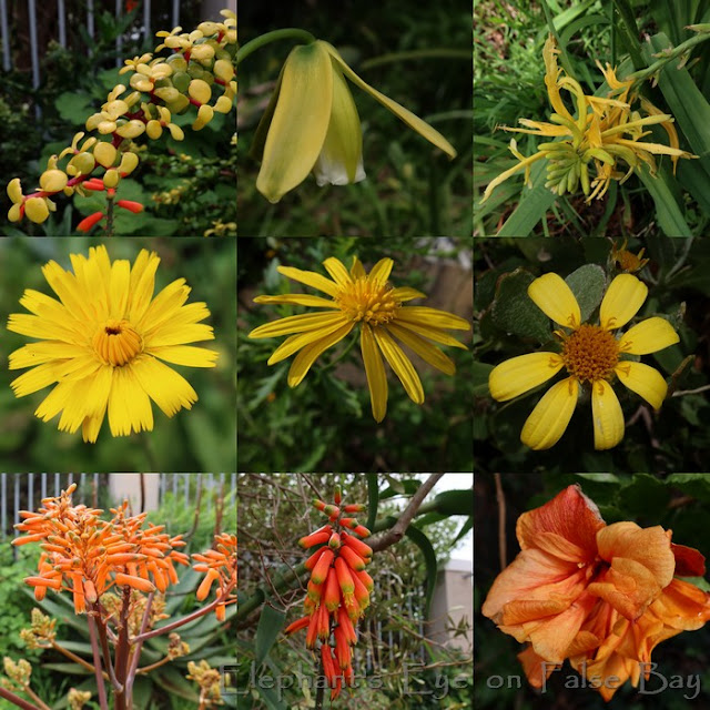 Yellow and orange August flowers