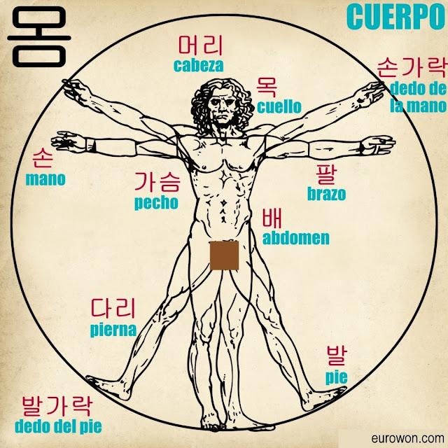 Dibujo con las partes del cuerpo en coreano y español