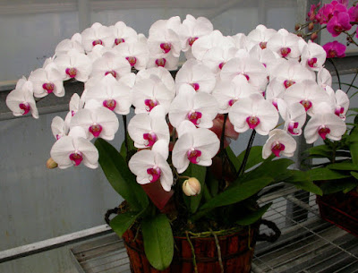 Shop hoa tươi quận 4 TpHCM