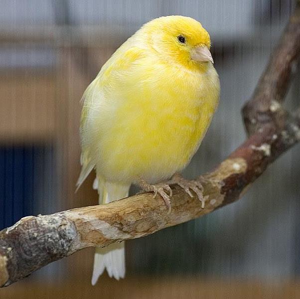 Banyak Burung Diatas Rumah