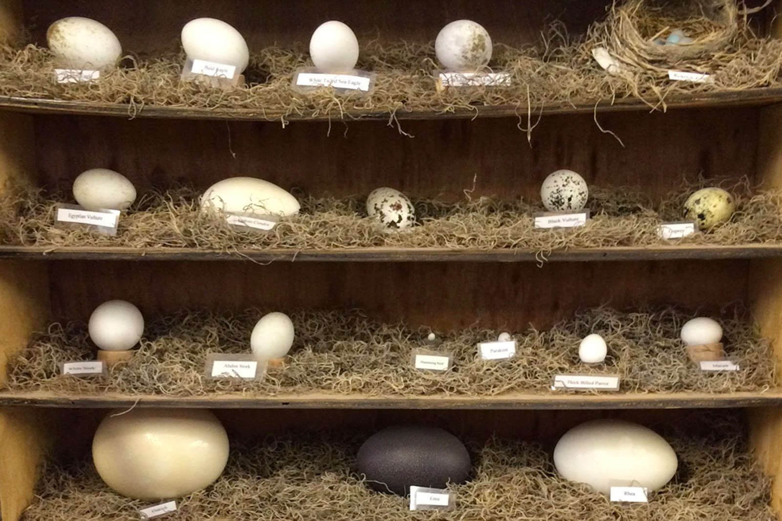 World Bird Sanctuary: What on earth is a Rhea?