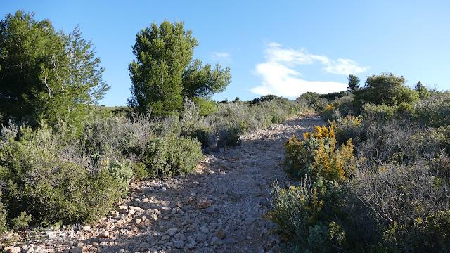 Sentier vers le Garlaban