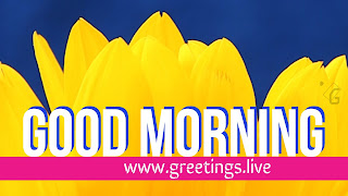 More attractive good morning wishes with Sun flower background