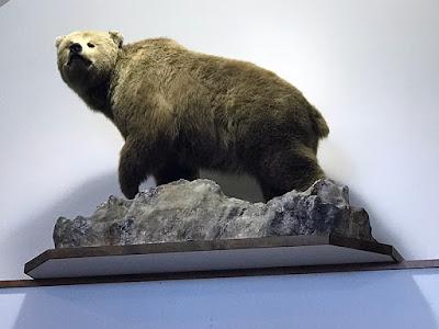 Bear (Kenai Visitor Center) - Soldotna, Alaska