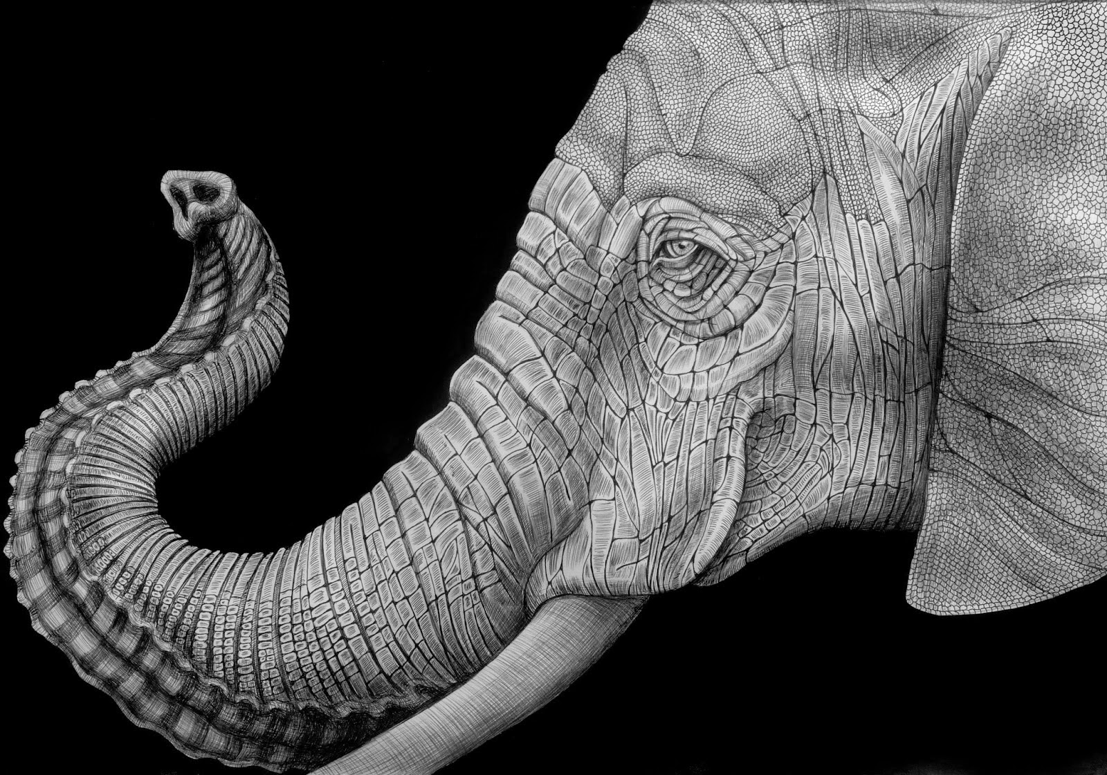 12-African-Elephant-Tim-Jeffs-All-Creatures-Great-and-Small-Ink-Drawings-www-designstack-co