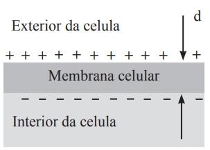 UNIFOR 2021: As membranas celulares são parcialmente permeáveis para permitir a passagem de material carregado, de acordo com a necessidade, considerando uma constante elétrica de 9 × 10-12 C²/N.m².