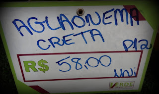 Quanto custa uma Aglaonema creta?