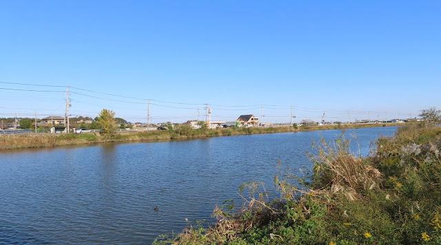豊かに水を湛える新利根川風景