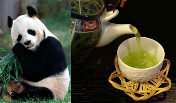 Teh Pupuk Panda